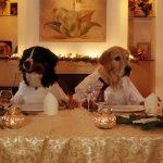 Dinner in Love – Das etwas andere Hunde-Abendessen
